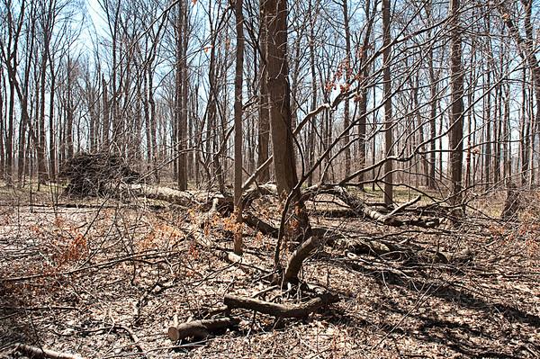140409 Tree Damage 1
