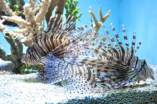 141112 Aquarium PP 6