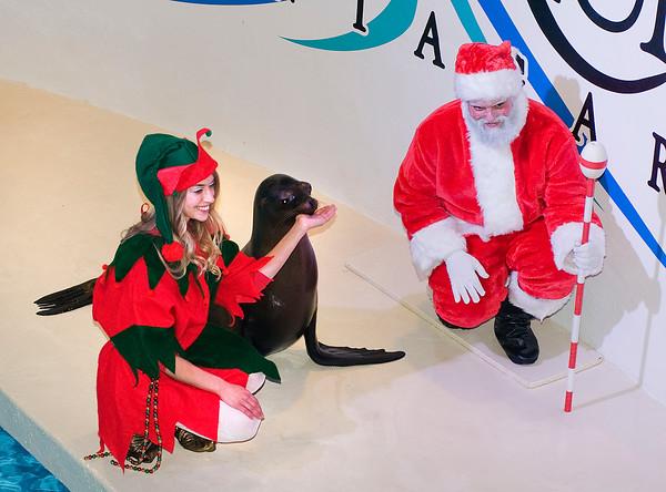 141220 Aquarium Christmas 2