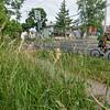 140625 Tall Grass 1