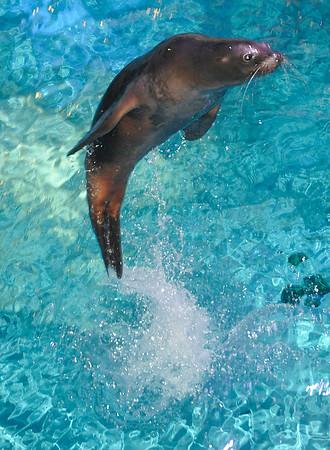 141112 Aquarium PP 5