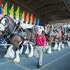 140525 Clydesdales 1
