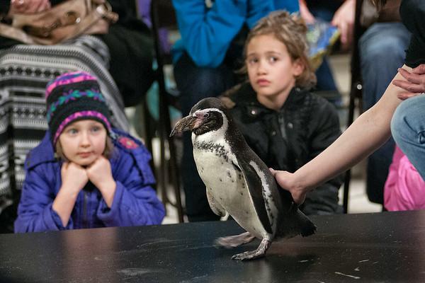 140329 Penguin Days 1