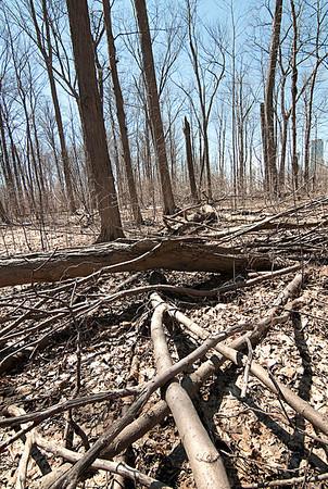 140409 Tree Damage 2