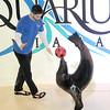 141112 Aquarium PP 4