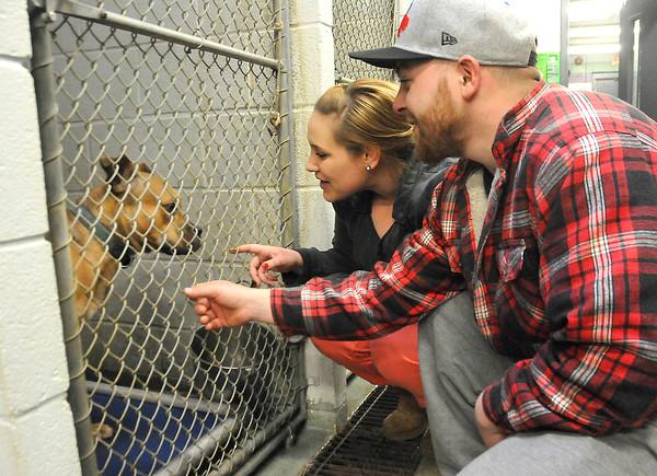 141227 SPCA pitbull 5