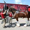 140813 Clydesdales 1