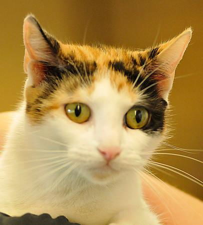 140821 Pet of the week