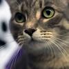 150708 Pet of the week 1