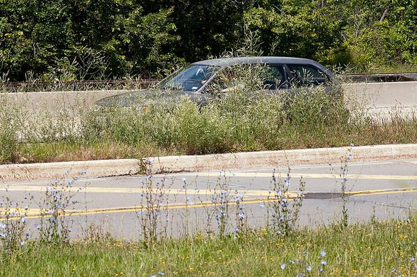 150722 Parkway Grass
