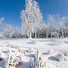 150109 Snow 5