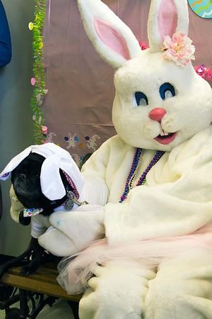 150329 SPCA Eggs 4