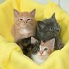 151014 Best- Animal Shelter