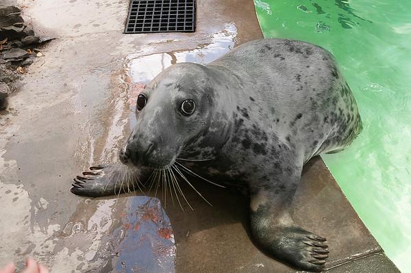 150722 New Seal 2