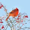 150113 Cardinals