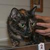 150527 Pet of the Week