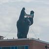 150618 Mighty Kong