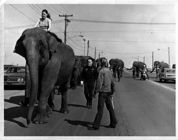 Convention Center - Bookings<br /> Circus Eleephants out walking around.<br /> Photo - By John Kudla - 4/25/1974.