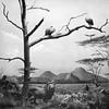 Berkshire museum diorama depicting African wildlife, undated photo.