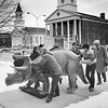 Berkshire Museum staff roll a model of a half-grown triceratops into the museum before a gala, February 15, 1980. The eleven foot model was made by the Louis Paul Jonas studio of Hudson, New York. Escorting the model are Katheryn Beebe, Joseph Trasatti, Thomas Smith, Gary Burger, ____ Trasatti and Bartlett Hendricks.