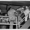 Niagara River - Rescues<br /> Rescue girl from Gorge<br /> Photo - By Niagara Gazette - 6/9/1968.