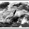 Niagara River, Kayaks, Unidentified Kayaker in the rapids between the whirlpool and bridge. Ron Schifferle 10/16/1987.