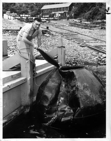 Niagara Falls, Stunters, Nathan Boya - Capt. Lawrence McGinn of the Maid of the Mist looks over Nathan Boya's ball. July 15, 1961