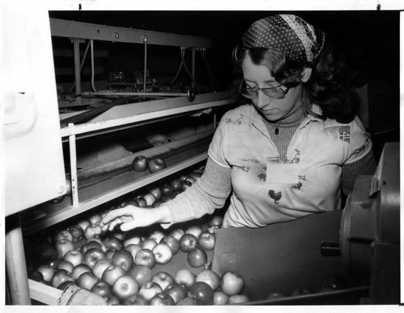 Fall - Hard at Work<br /> Linda Malcolm is hard at work.<br /> Photo - By Niagara Gazette - 10/8/1977.