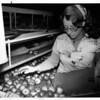 Fall - Hard at Work<br /> Linda Malcolm is hard at work.<br /> Photo - By Niagara Gazette - 10/8/1977.