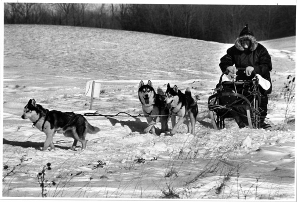 Dog Sled Rales<br /> Empire State sled dog drivers race River Oaks Golf Course.<br /> Carol Batr from Corfu, N.Y. with her three dog team of AKC Siberian Huskies on the race course.<br /> Photo - By Ron Schifferle - 1/24/1987.