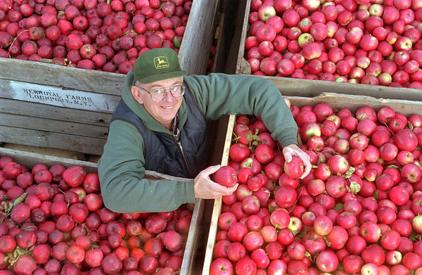 Alan Buhr, Co-owner of Newroyal Farms in Royalton NY, displays some of the apples that made this years crop one of his biggest.<br /> <br /> Farmer Farm Apples Growing