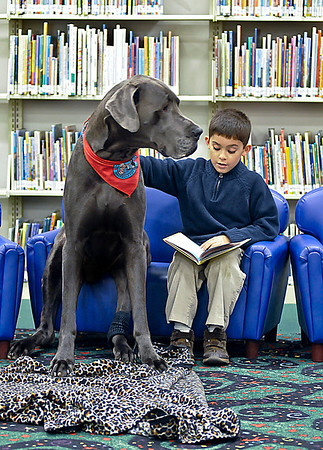 James Neiss/staff photographerLewiston, NY - Seven year old Robert Gilbert got the opportunity to practice reading out loud with the help of Ben Valenti the Great Dane at the Lewiston Public Library. Apparently Ben Valenti is also a great listener as part of The Tail Wagging Tudors program.