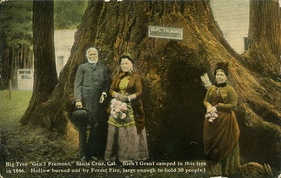 """Big Tree """"Gen'l Fremont,"""" Santa Cruz, Cal.  (Gen'l Grant camped in this tree in 1846.  Hollow burned out by Forest Fire, large enough to hold 50 people.)"""