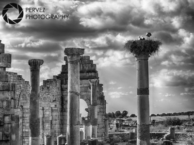 Storks at the Basilica in Volubilis
