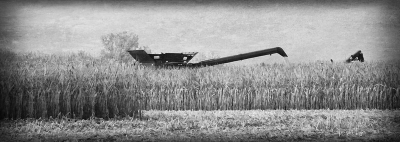 Monster in the Corn Field