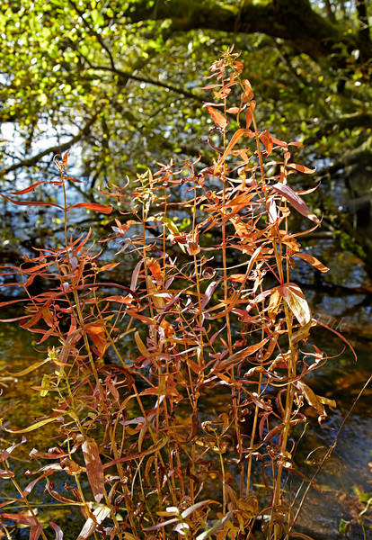 Inchmahome Priory - Plant Life - 7 October 2012
