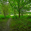 Woods at Kinneil House in Bo'ness - 28 June 2014