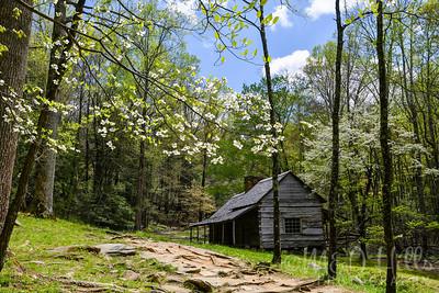Spring Morning At The Ogle Cabin