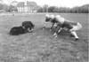 Football bears