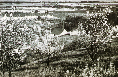 Turn of the Century Orchards in Silicon Valley