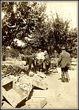 Santa Clara orchard c. 1918 with customers looking at fruit