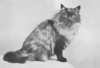 CH Backwell of Jogram, Black smoke Persian, born 1897, UK  CH Backwell of Jogram, Sort smoke perser, født 1897, UK