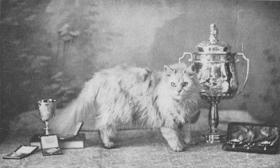 CH Fulmer Zaida, Chinchilla Persian, born 1895, USA(?)  CH Fulmer Zaida, Chinchilla perser, født 1895, USA(?)