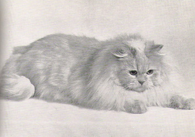 Double Grand & Quad. CH Suni June of Dawn, Cream Persian, born 1950, USA