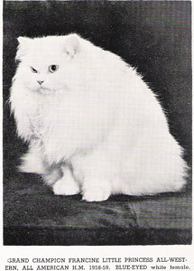 GC Francine Little Princess, White blue eye Persian, born 1956, USA