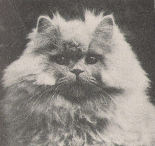 IC The Autocrat of the Court, blue Persian, born 1932, UK