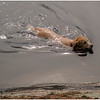 Adirondacks Forked Lake Brody Swimming Campsite 36 September 2013
