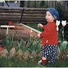 ADelmar NY Dumbarton Jenna Tulips March 2000