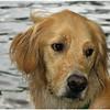 Adirondacks Forked Lake Brody Closeup 1June 2008