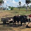 Kim Cuba Western Farmer March 2017